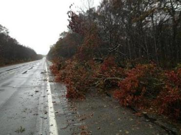 Downed trees on Route 88 in Westport.